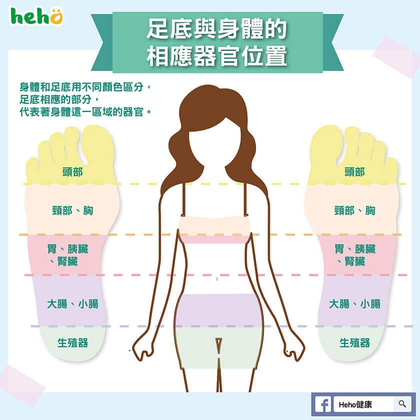 足底與身體的相應器官位置