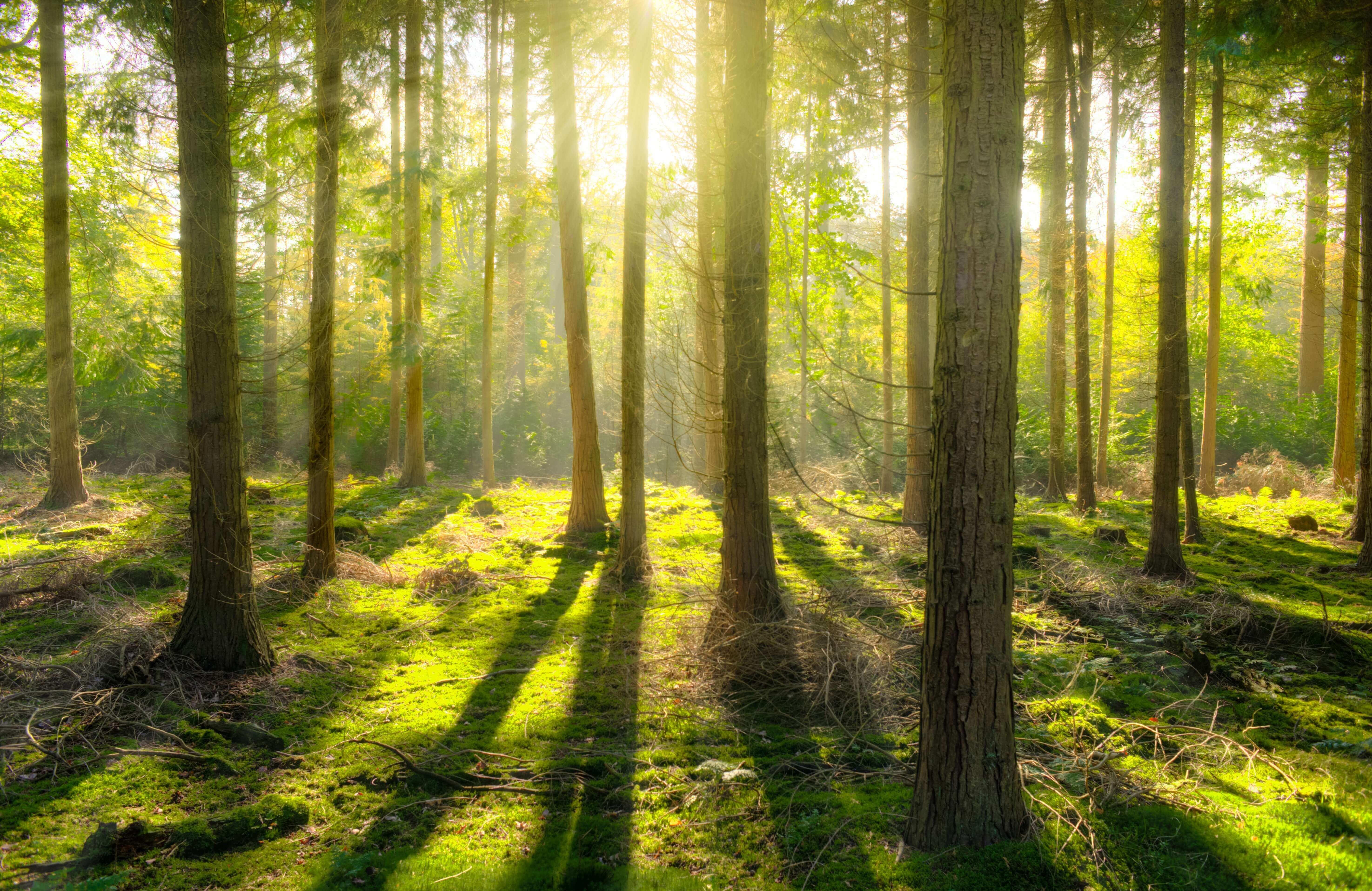 趁著連假安排一場踏青吧!推薦全台 5 大森林浴仙境