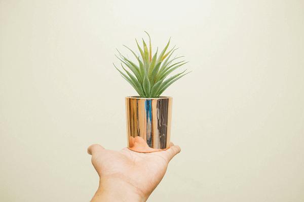 植物界最強清淨機!淨化空氣、清除 PM2.5 靠這 3 植物