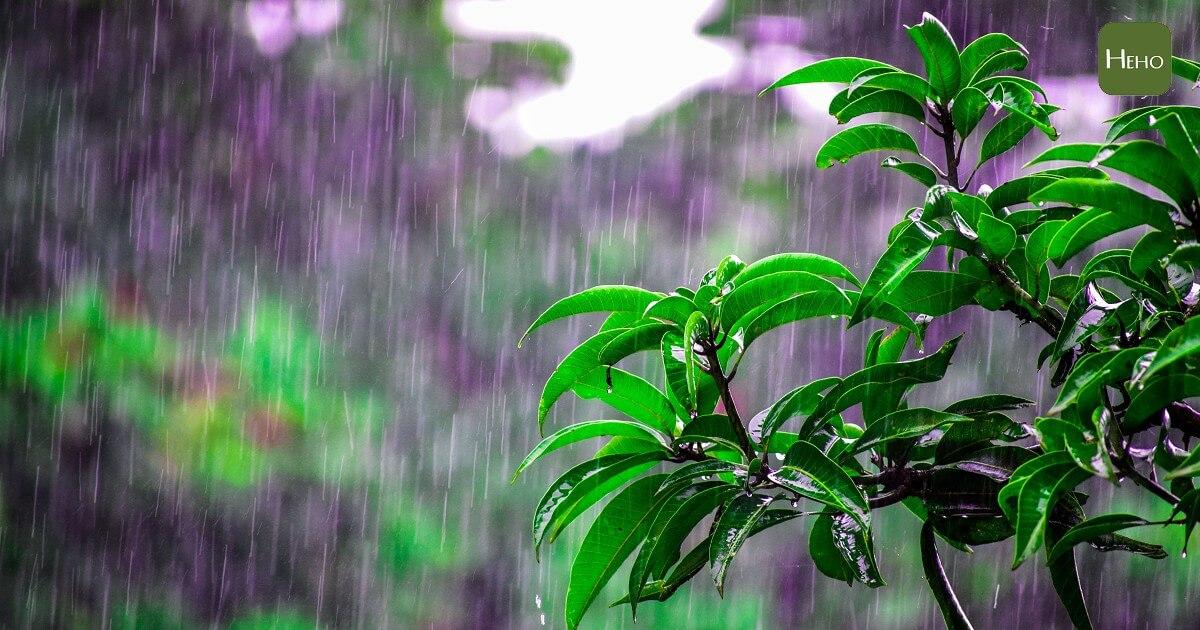 下雨前總有股「雨味」?原來是土壤的造成的!