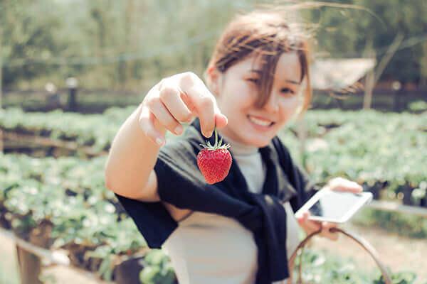 草莓季提前 1 個月登場啦!3 撇步從挑選到保存通通搞定