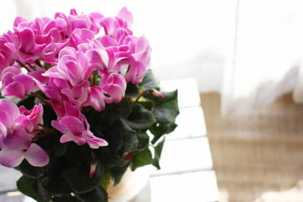 居家生活升級的關鍵!就從種植這 5 種室內花開始