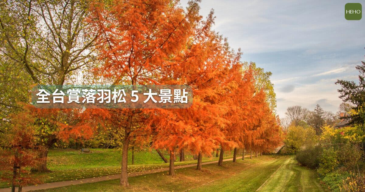令人難忘的橙紅樹林提前報到啦!全台賞落羽松 5 大私房秘境