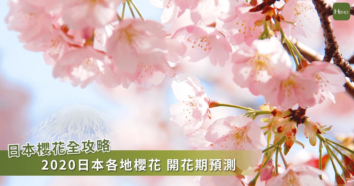 日本櫻花預測出爐! 「暖春發威」東京提早一星期開花