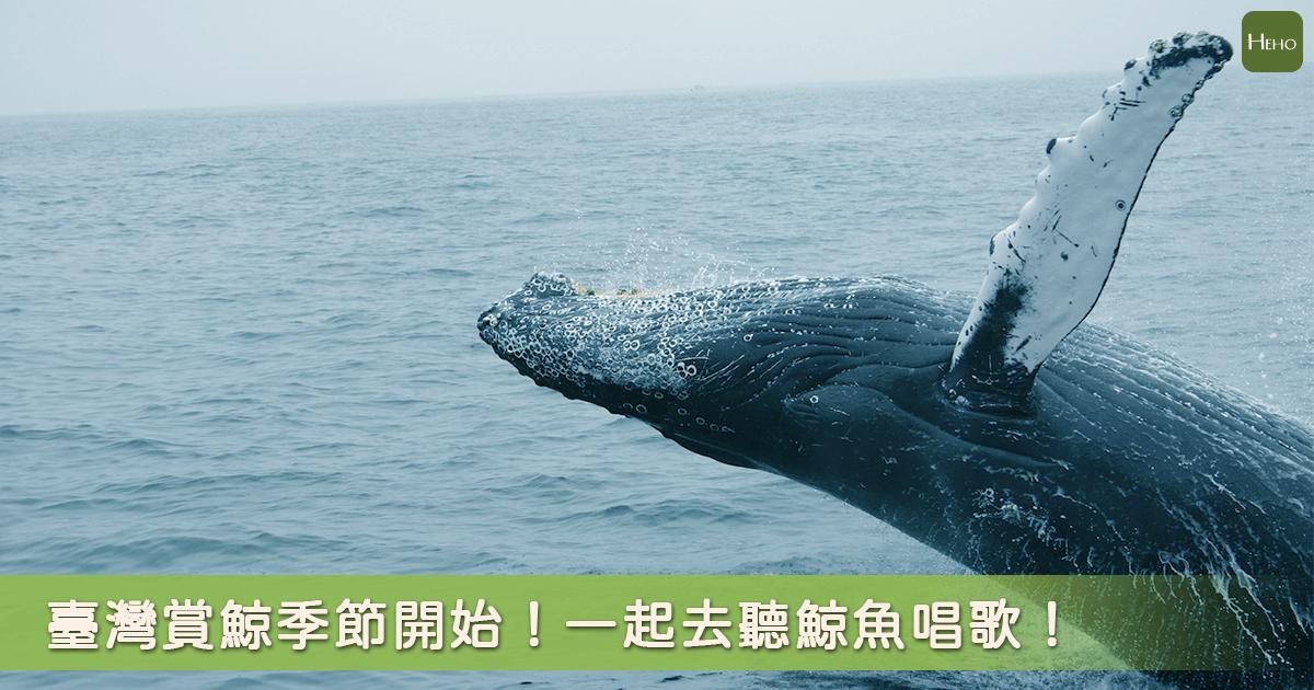 有一種旅行叫作追鯨魚!這些地方可以遇見「海裡巨人」