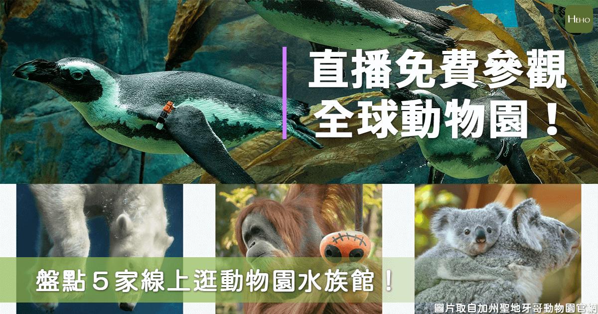 看動物最能療癒心情了!用直播免費參觀全世界動物園