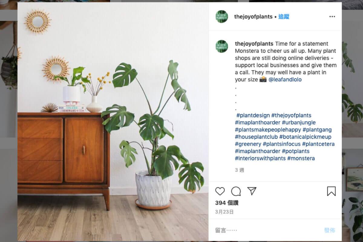 在家裡打造一片室內綠洲!善用綠色植物讓家變得更溫馨