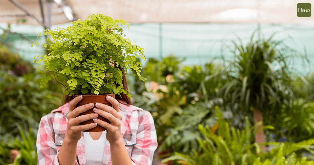 把自己的家打造成植物園!熱帶系植栽現正搶手中