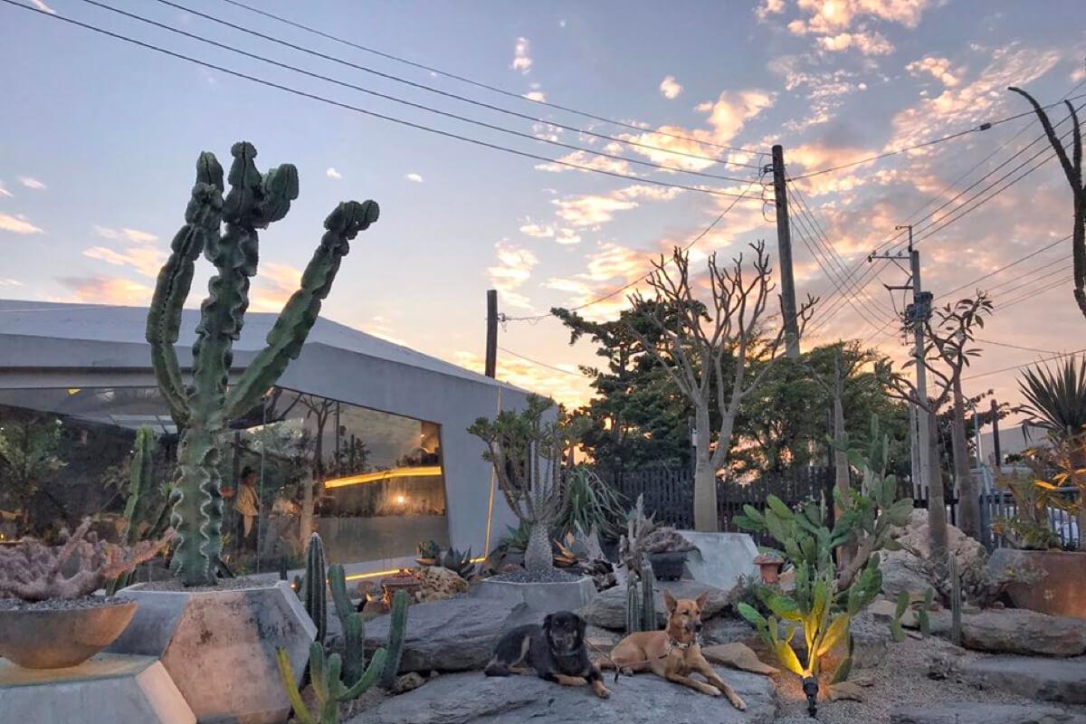 「有植感」的居家空間是現在潮流!走趟植物販賣店選購心中的最佳綠葉