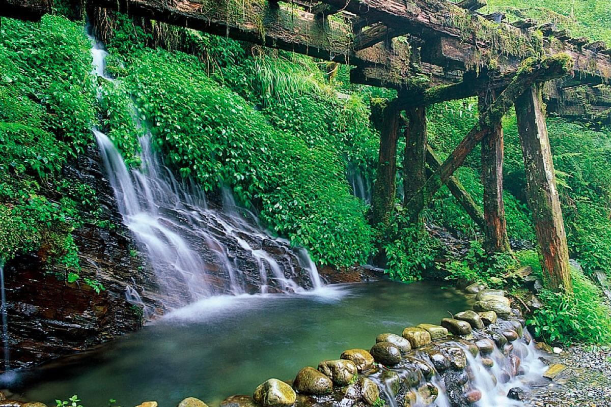 走入森林就能享受活氧、芬多精、負離子!推薦5個值得「森度旅行」的遊樂園